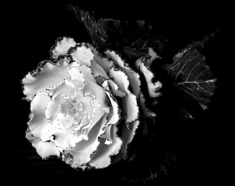 Black and White Art Photograph