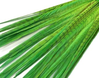 "Green Feathers, 10 Pieces - 20-22"" LIME GREEN Long Ringneck Pheasant Tail Feathers : 4144"