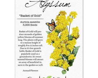 Alyssum Seeds, Basket of Gold (Aurinia saxatilis) Open Pollinated Seeds by Seed Needs