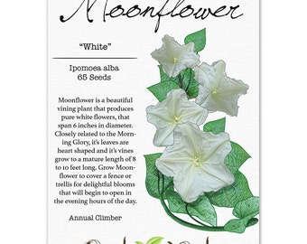 Moonflower Seeds, White (Ipomoea alba) Non-GMO Seeds by Seed Needs