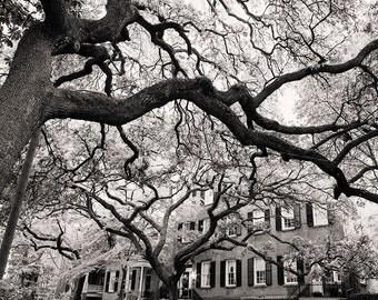 Black and White Wall Art, Savannah Photograph, Architecture Fine Art Print, Georgia Art, Affordable Home Decor, Travel Photo, Jones Street