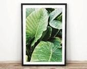 PRINTABLE wall art. Tropical leaves 8x10 and 11x14. botanical, green, room decor, modern decor, tropical print, banana leaves