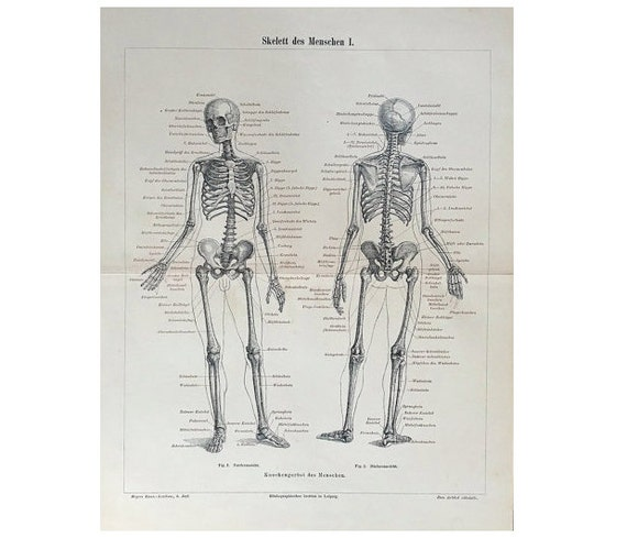 1894 HUMAN SKELETON print original antique medical anatomy lithograph