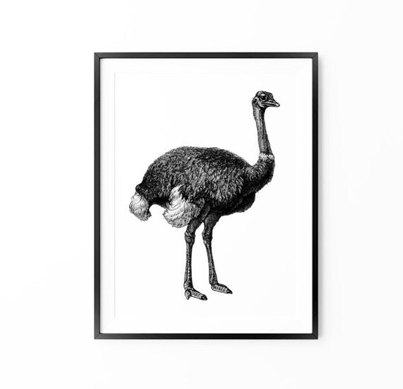 Ostrich Print , Vintage Wall Art , Animal Print , Vintage Animal Poster , Black and White Animal Poster, Large Wall Art, Oversized Art