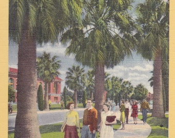 "University of Arizona Post Card, 1950, Colorized Linen, T-36 ""Between Classes"", Vintage U of A Wildcats, Tucson, Travel, Souvenir Ephmera"