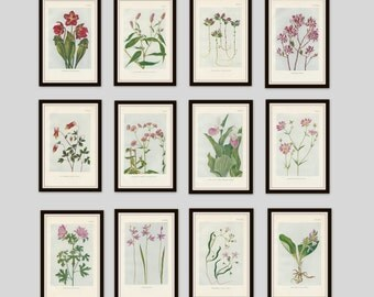 Any 6 Botanical Prints, Set of 6, Antique Botanical, Botanical Print Set, Set of Prints, Cottage Decor, Victorian, Lithograph, Wildflower