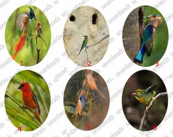 Birds Oval Photo Glass Cabochons ,jewelry Cabochons finding beads,jewelry findings,Glass Cabochons,Ovla Cabochons,jewelry finding