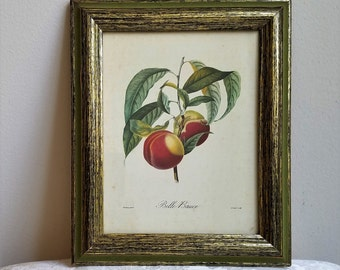 "Vintage Botanical Fruit Peaches Wall Art Print in Wood Frame ""Belle Bauce"" by Academy Arts"