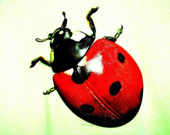 Lady Bug Womans Short Sleeve T Shirt 11164TD5