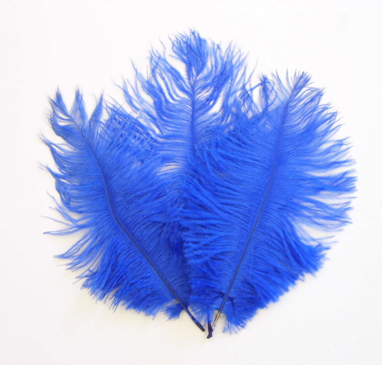 Sale royal blue ostrich feathers was now from