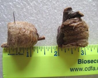 Luna moth cases - SHIP FREE