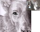 3 custom pet portraits pencil/graphite