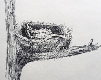 Young Robins - Original Ink Drawing - 8x8