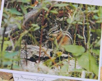 Snacking Chipmunk Photo Note Card. Montana Wildlife Nature Photography. Woodland Critters. Forest Friends.