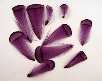 Purple Feathers Lady Amherst pheasant 10 pk Feathers for fascinator earrings hair fly tying crafts  LATD-19