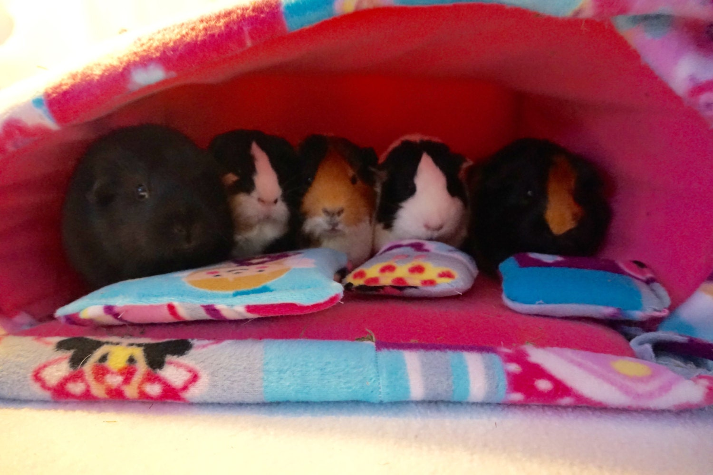 Princess Fairy Guinea Pig Bed Guinea Pig Hideout