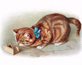 Cat Greeting Card | Orange Tabby Watches Mouse in Trap | Marmalade Cat Notecard
