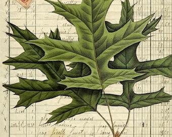 Leaves & Acorns 2 - 11x17 Artist Print - X326 - Fall - Scrapbooking - Decoupage - Home Decor - Print