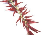 Spicy Hot Red Peppers Fiesta Paper Mache' Decoration 2 ft