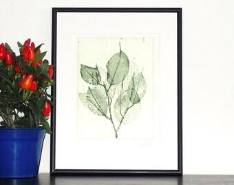 Original Etching Print Green Leaves Garden Botanical Aquatint Printmaking BRIGHT SIDE LEAVES Shabby Wall Decor Fine Art Print 10x8