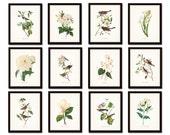 Bird and Botanical Print Set No. 10, Audubon Bird Prints, Botanical Prints, Prints and Posters, Gallery Wall, Print Sets, Canvas Art, Giclee
