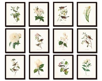 Bird and Botanical Print Set No. 10, Audubon Bird Prints, Botanical Prints, Redoute, White Flower Prints, Vintage Bird Prints, Art, Giclee