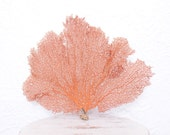 Large Piece of a Coral Red Sea Fan, Coastal Beach Decor, 6 Available