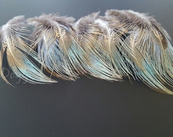 Small Feathers Craft Supplies Feathers for Crafts Pheasant Feathers Small Blue Green Brown Feathers for Supplies