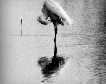 Snowy Egret Print 16x20