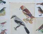 Vintage lot instant collection Book Plate Birds Bird Wall decor