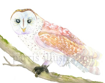 Barn Owl No.1, Archival Print of Original Watercolor, you choose size