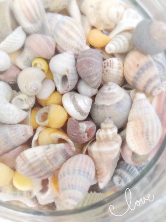 Tiny sea shell mix small sea shells bulk diy beach theme for Tiny shells for crafts