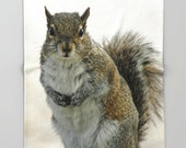 Fleece Throw Blanket, Gray Squirrel, Throw Blanket, Photo Throw Blanket, Home Decor, Bedding, Sherpa Throw, Fine Art Photography