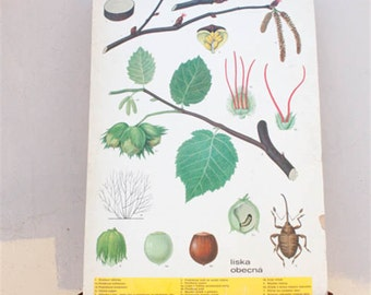 Vintage Botanical Poster Print