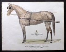 Mark W. Cross & Co. C1900 Rare Horse Print. Harness for Heavy Buggy.