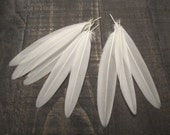 Mallard White Underwing Feathers ~ 8 Pieces Cruelty Free