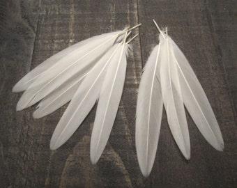 Mallard White Underwing Feathers ~ 8 Pieces Cruelty Free