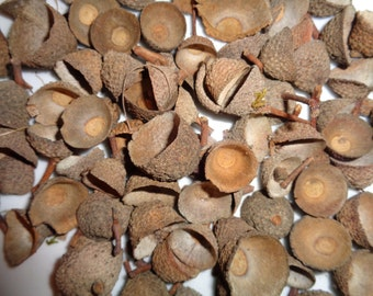 100 White Oak Acorn Caps, Acorn Tops