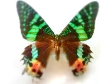 green orange butterfly