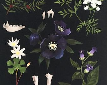 8x10 fine art print, botanical art, dark floral, poisonous plants, poisonous flowers, hellebore, belladonna, bloodroot, hemlock, poisons