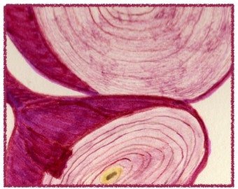 NEW! detail of RED ONION note card.  Colorful and hand drawn.