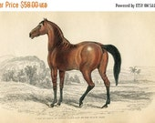 SALE Antique Hand Coloured Bookplate Color Print Engraved Jardine 1840 Naturalists Mammalia Horses Foul Brood Mare Of Black Arab Plate 27