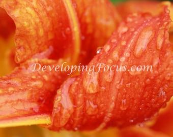 Orange Daylily Close Up, Orange Flower with Rain Photography, Abstract Orange Art Photo, Macro Flower Photography, Orange Photo Art