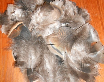 Real Turkey Feathers for crafts, bulk feathers