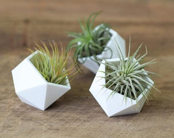 Geometric Air Plant Holders - Set of 3 -FREE SHIPPING!