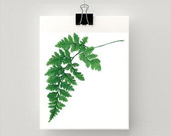 Maidenhair Fern botanical print from original watercolour artwork
