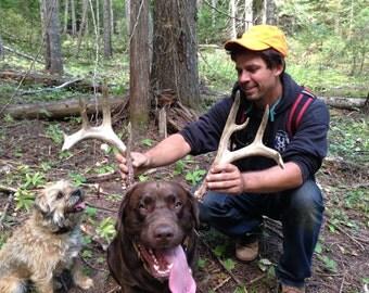 Whitetail Deer Shed Antler -- Free Shipping