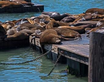 Pier 39 Chilling Seals, San Francisco, Seal Photography, Seal Art, Seal Print, Seal Decor, Fisherman's Wharf