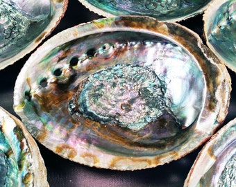 Abalone Shell Smudge Pot - Large Premium Shell Handpicked for Brilliant Color & Quality - Use for Smudging or to Store Sacred Crystals