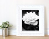 White Rose, Black and White Floral Photography, Nature, Fine Art, Wall Decor